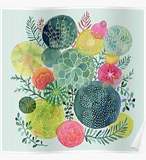 Succulent Circles Poster