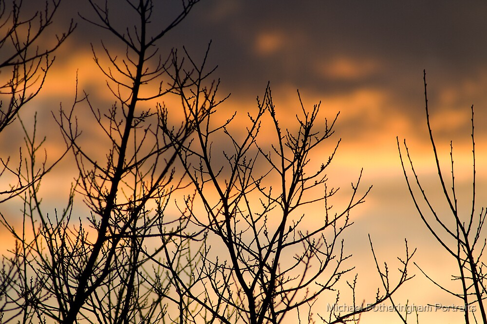 Winter trees at dusk by Michael Fotheringham Portraits