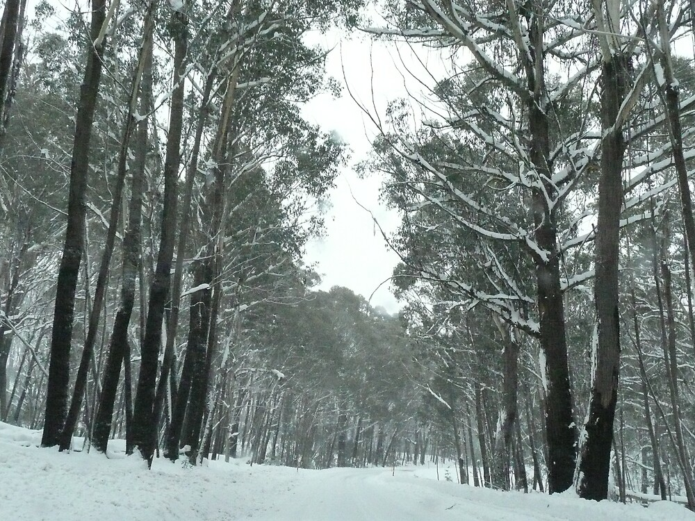 Road to Cabramurra Winter by tallboy