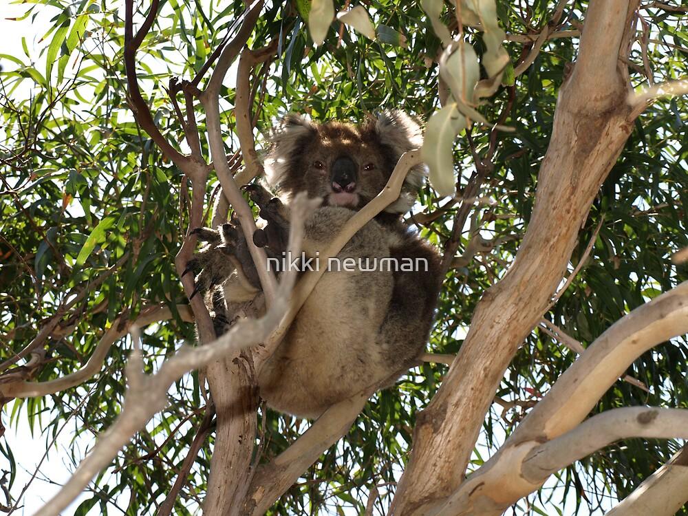 french island koala by nikki newman