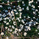 Spring flowers on the north york moors by dougie1
