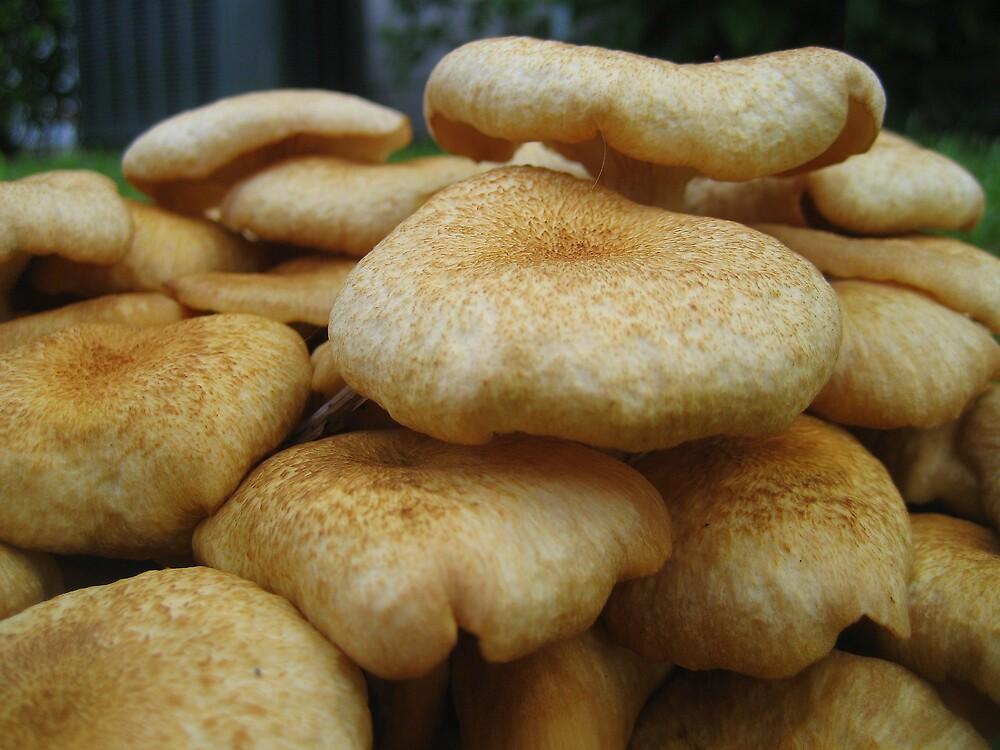 More Mushrooms by mekea