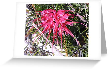 Grevillea! by Lesley  Hill