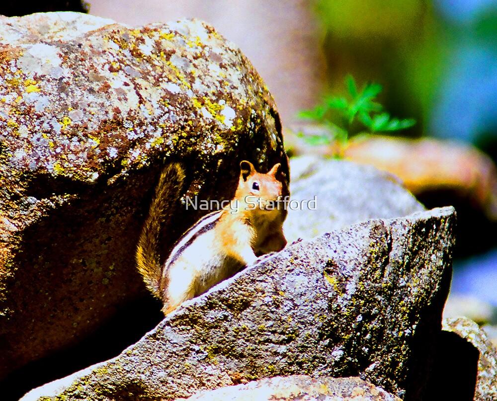 Got Nuts? by Nancy Stafford