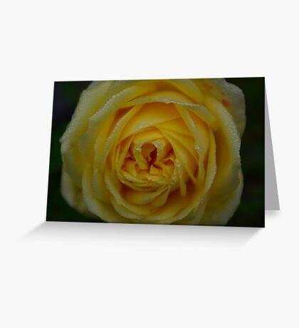 Dewey Rose Greeting Card