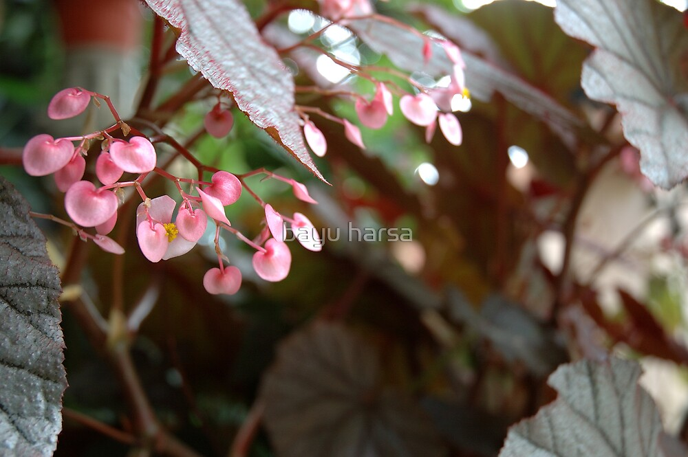 red flower by bayu harsa