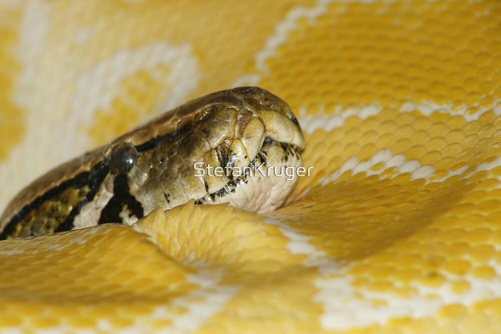 big python by StefanKruger