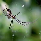 Spiders have jewels on their legs by Clare Colins