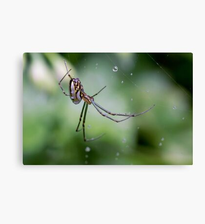 Spiders have jewels on their legs Canvas Print