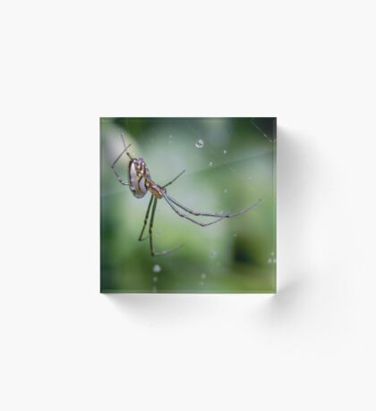 Spiders have jewels on their legs Acrylic Block