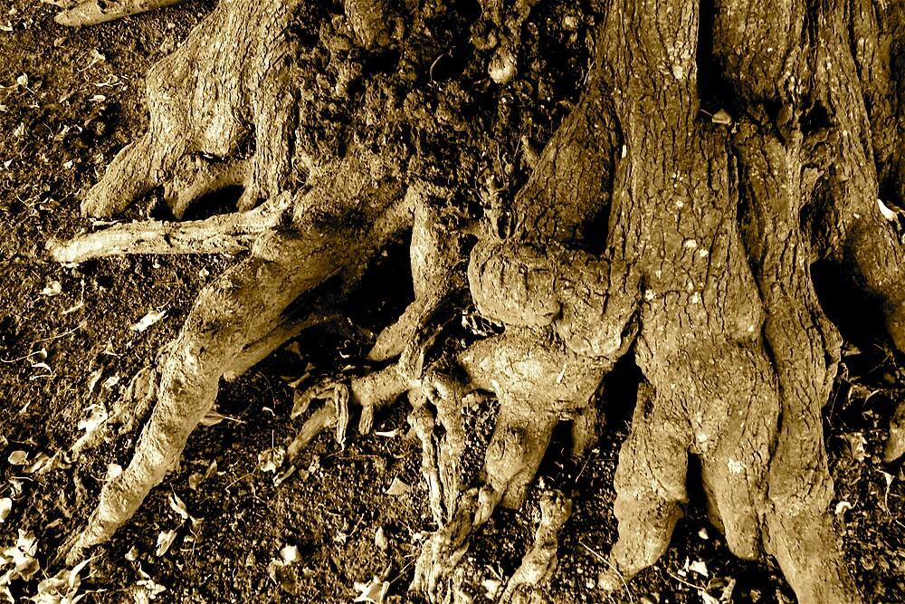 Rooted 6 by Amanda Gazidis