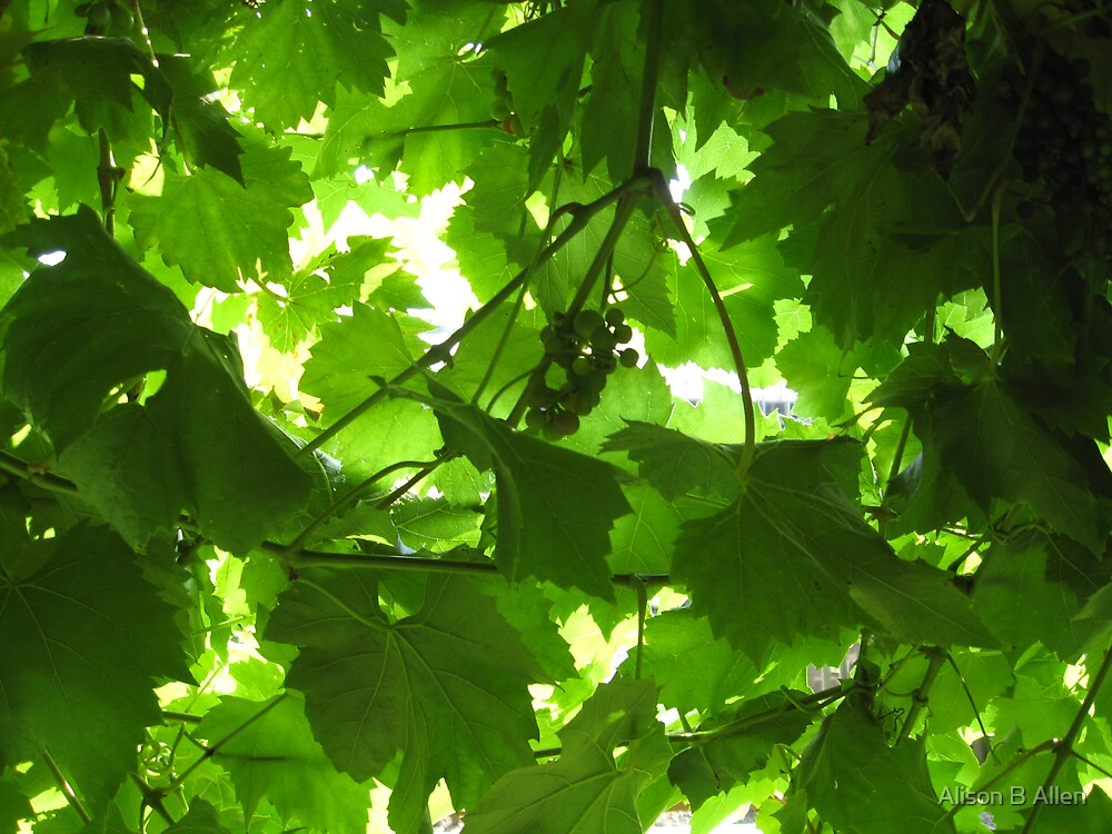 Sunlight with green (Sept 2008) by fatchickengirl