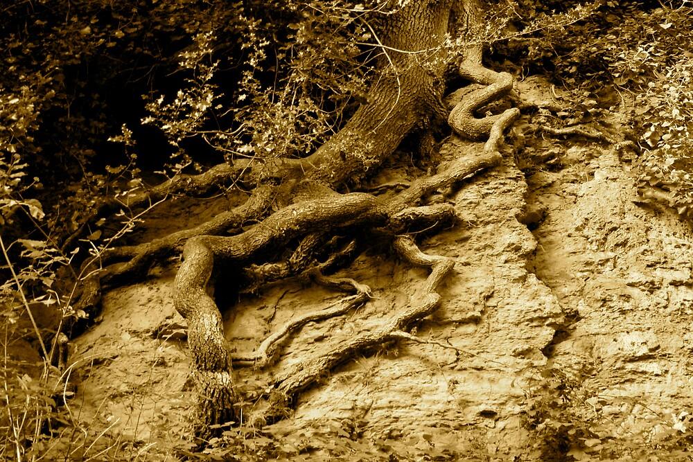 Rooted 8 by Amanda Gazidis