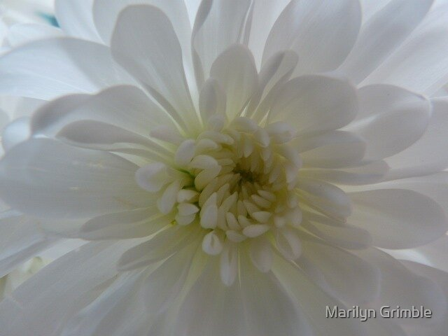 Blanche ... by Marilyn Grimble
