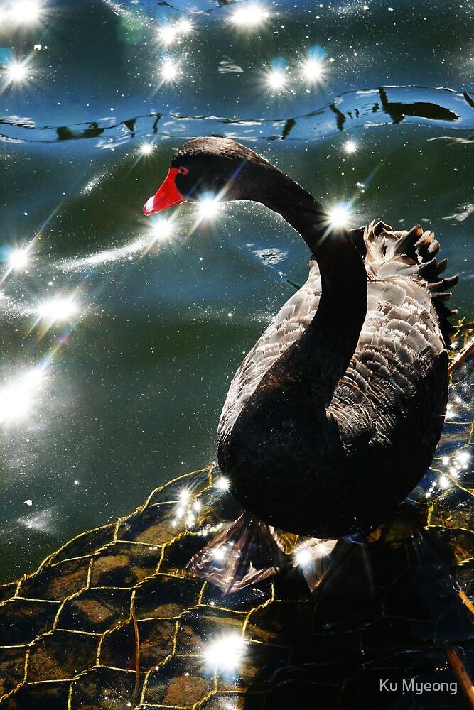 Black Swan! by Ku Myeong