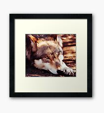 Howling for the Pack Framed Print