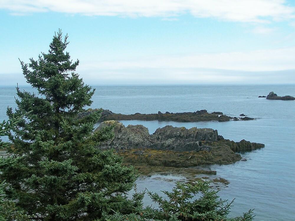 Evergreen Coast by Gene Cyr