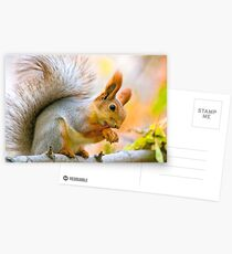Red euroasian squirrel washes on the maple branch Postcards