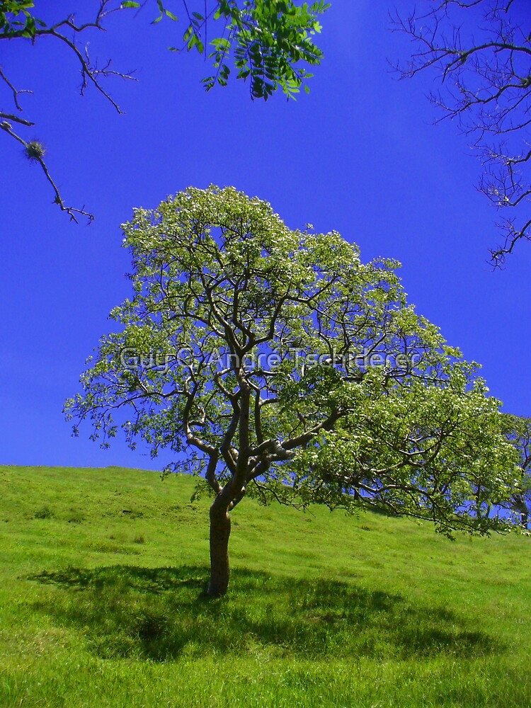 The lonely Tree, Costa Rica by Guy C. André Tschiderer