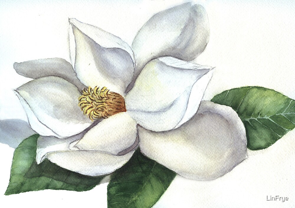 Magnolia by LinFrye