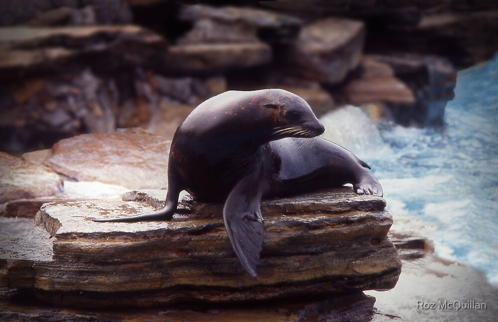 Seal on a rock by Roz McQuillan