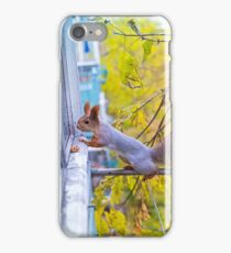 the squirrel looks for to eat on a balcony iPhone Case/Skin