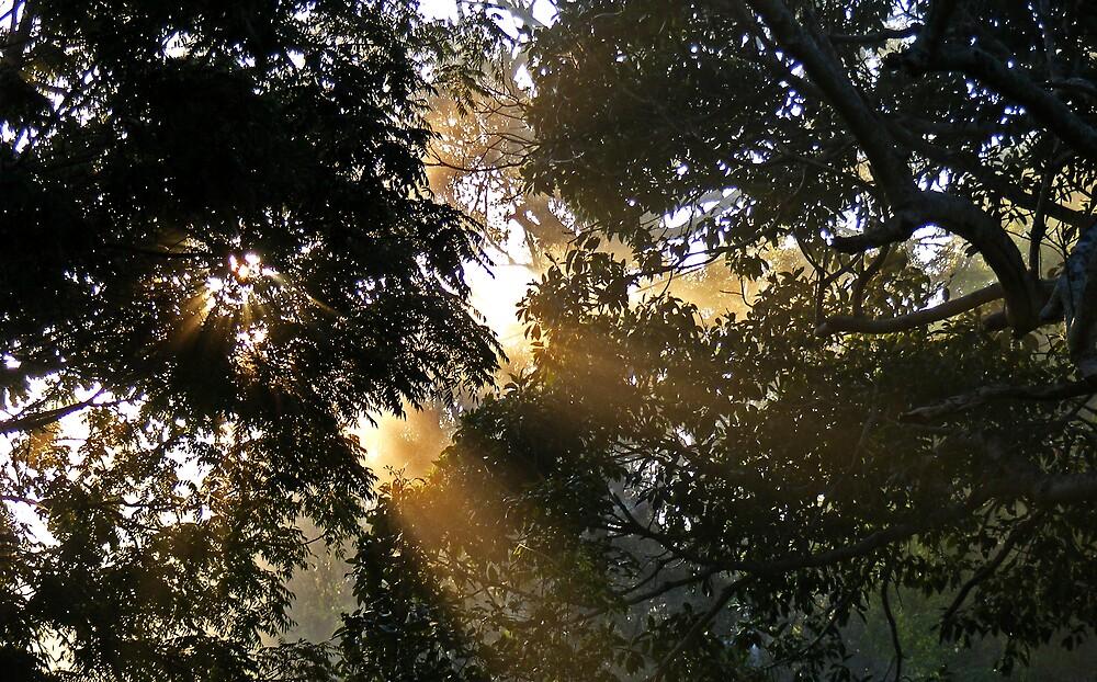 Morning Sunlight through trees by Ben Kelly