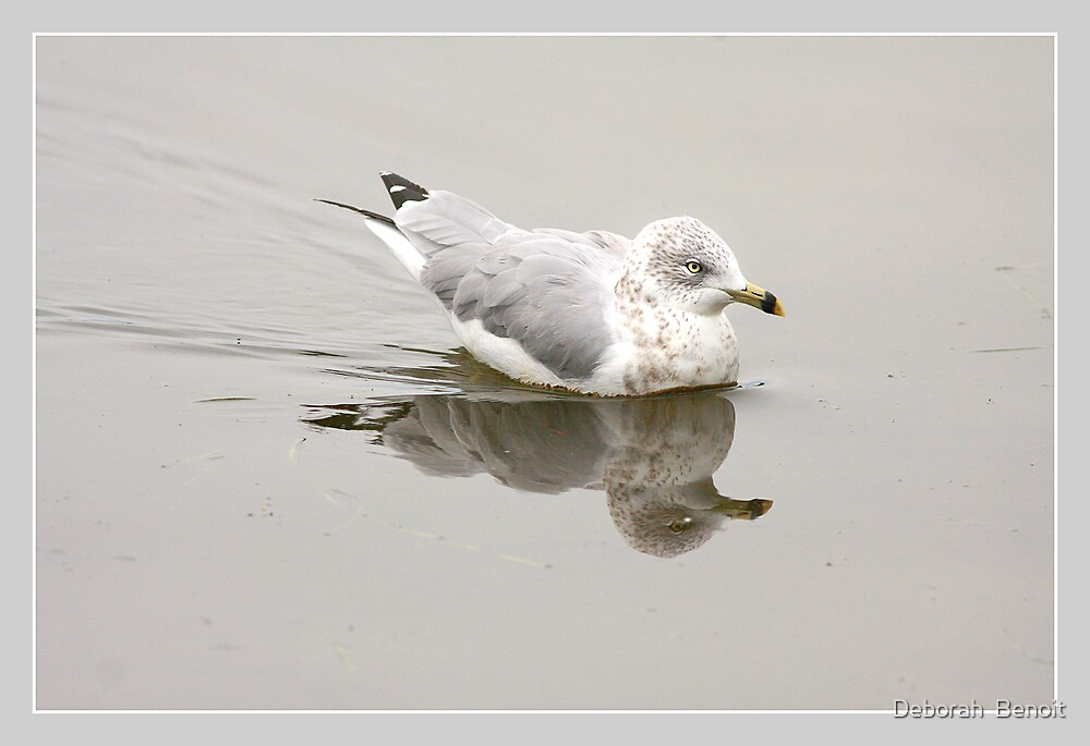 Seagull Reflections by Deborah  Benoit