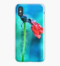 faded poppy flower hanging on the stalk iPhone Case/Skin