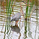 In The Reeds by Deborah  Benoit