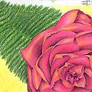 Rainbow Pink Rose by JazmynMarie