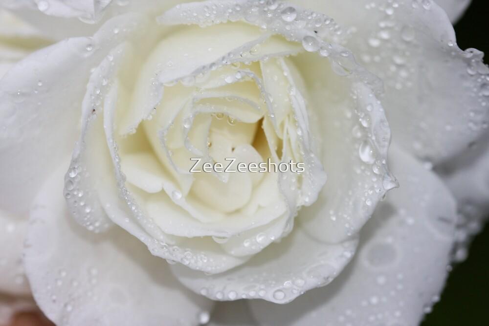 A White Rose with rain drops by ZeeZeeshots