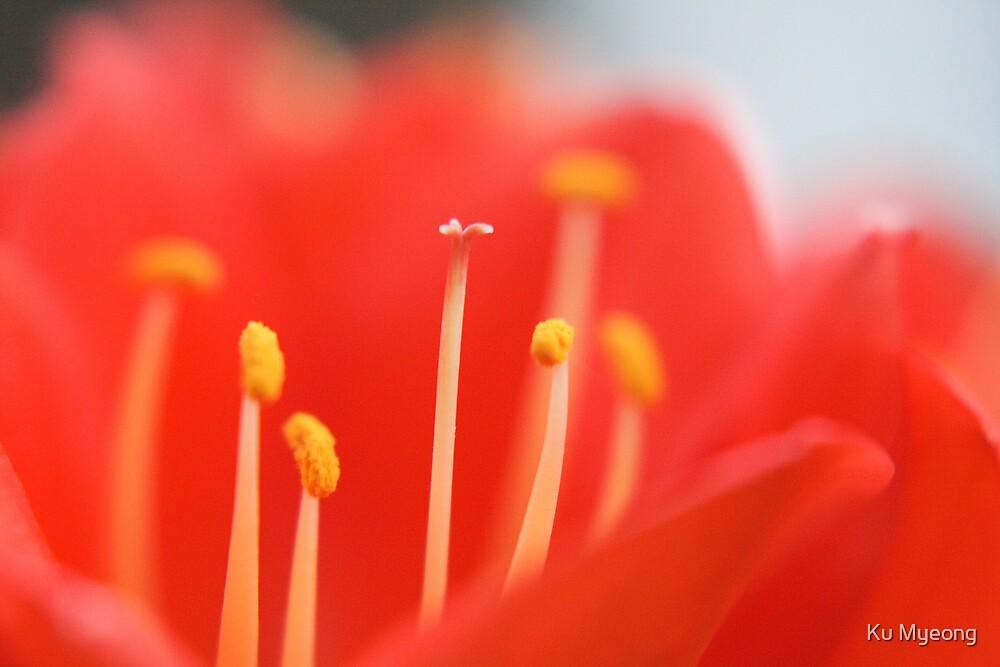 Close up pollens by Ku Myeong