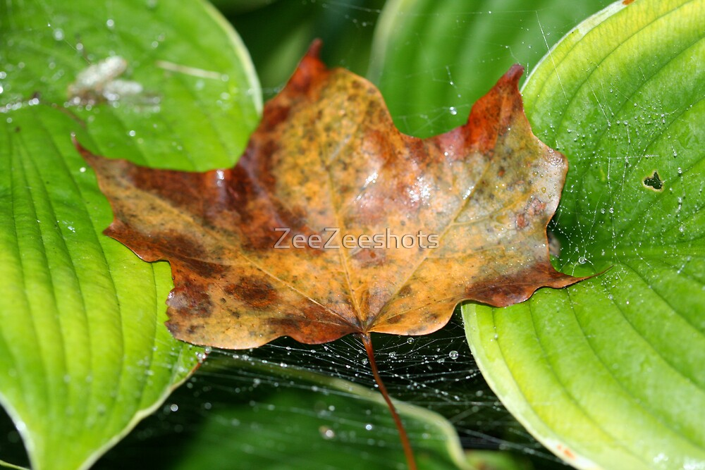 A sign of Fall by ZeeZeeshots