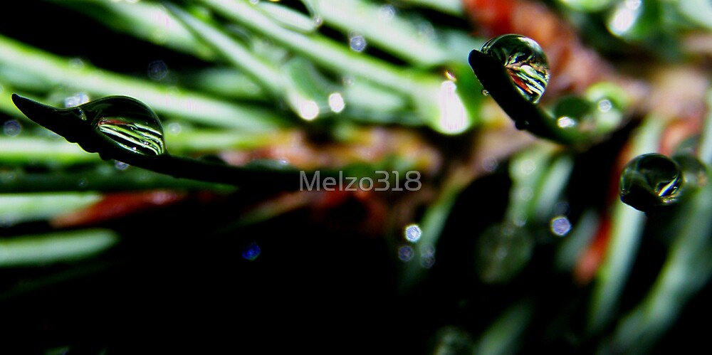 Pines in Pine Drops by Melzo318