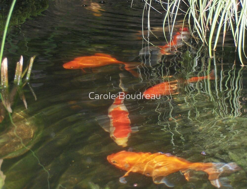 """""""Pond Angle"""" (1) by Carole Boudreau"""