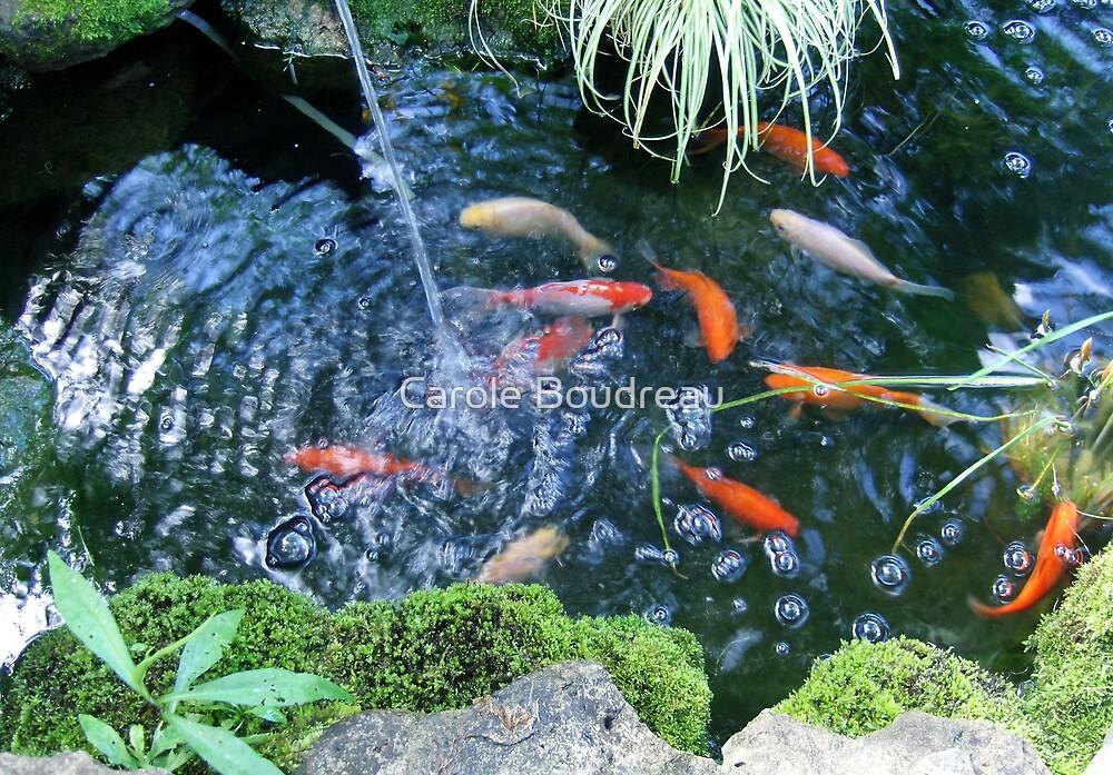 Pond Angle (2) by Carole Boudreau