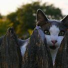 Watch Cat by Debbie Irwin