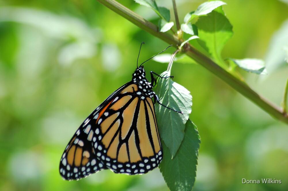 Monarch by Donna Wilkins