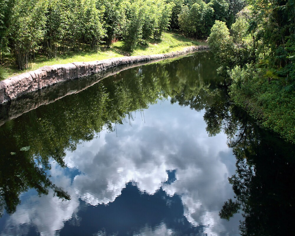 Reflections (*my 1st shot like this) by Stacey Milliken