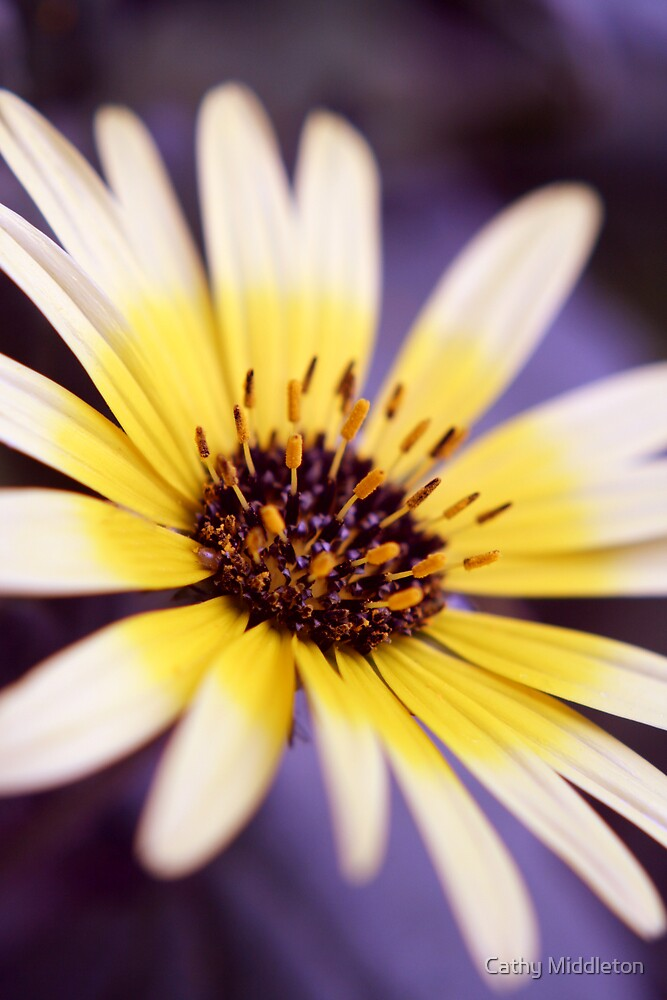 Daisy Light by Cathy Middleton