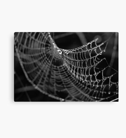Fragile Beauty Canvas Print