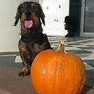 Noodle and his Pumpkin by Bine