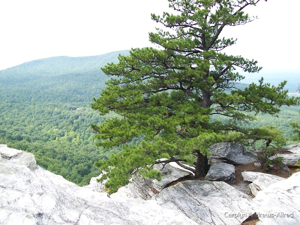 Northwestern view From Atop Hanging Rock by Carolyn Andrews-Allred