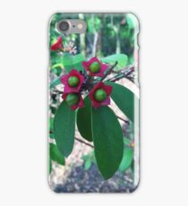 Clerodendrum, Glenbrook NSW Australia iPhone Case/Skin