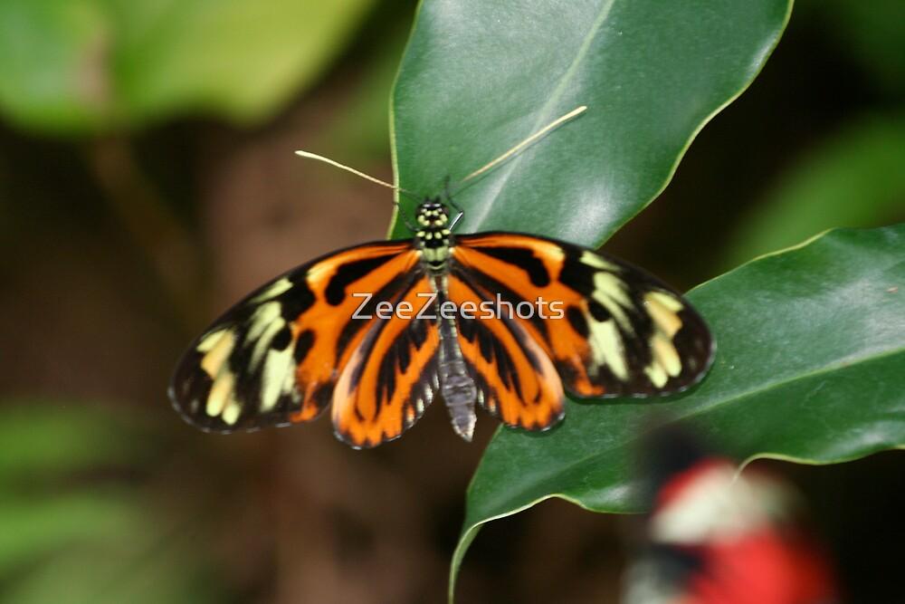 Ismenius Butterfly by ZeeZeeshots