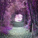Purple Fantasy Woodland Forest Path by Shelly Still