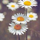 parasols_02 by Aimelle