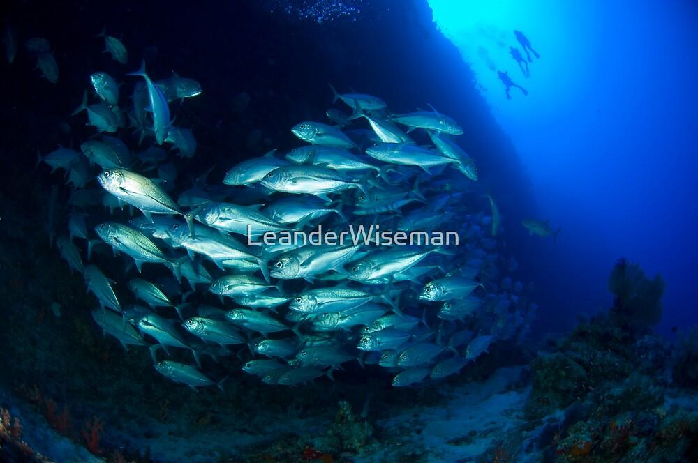 Divers and Schooling Jacks by LeanderWiseman