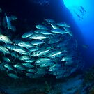 Divers and Schooling Jacks by LeanderWiseman